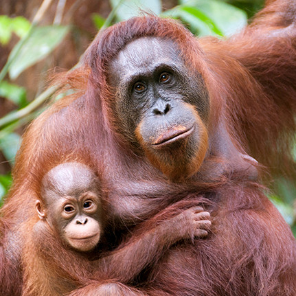 Action on palm oil